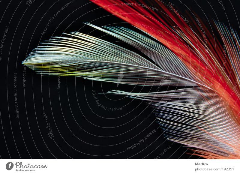 Bunte Federn schön weiß blau rot schwarz gelb Leben Fröhlichkeit weich Feder Spielzeug abstrakt Kreativität bizarr Surrealismus Makroaufnahme