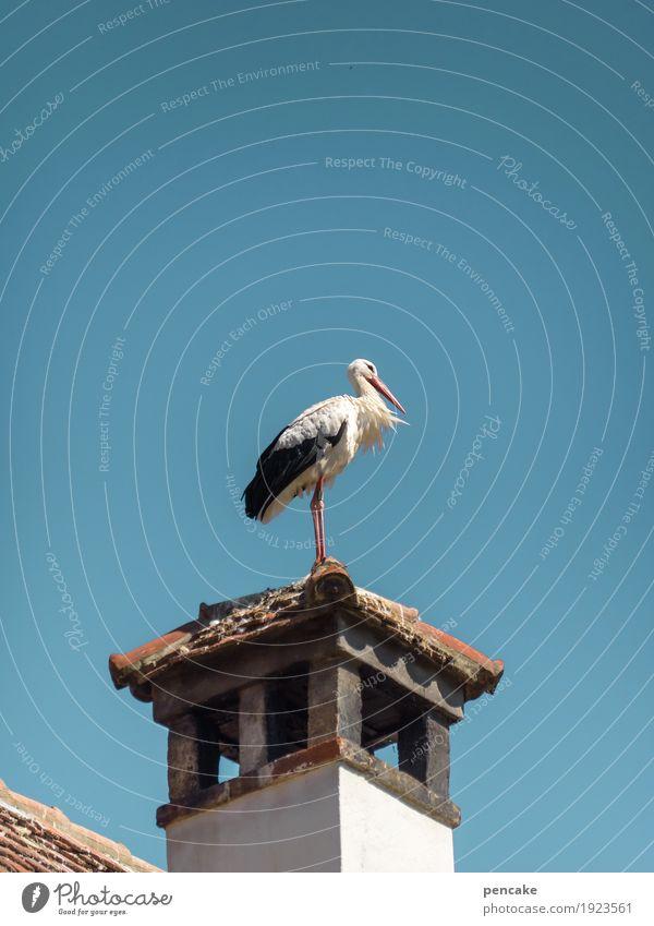ostwind Himmel Wolkenloser Himmel Turm Dach Wildtier Vogel 1 Tier authentisch Storch Schornstein Dachziegel Wind Erwartung Baby Frühling Frühlingsgefühle