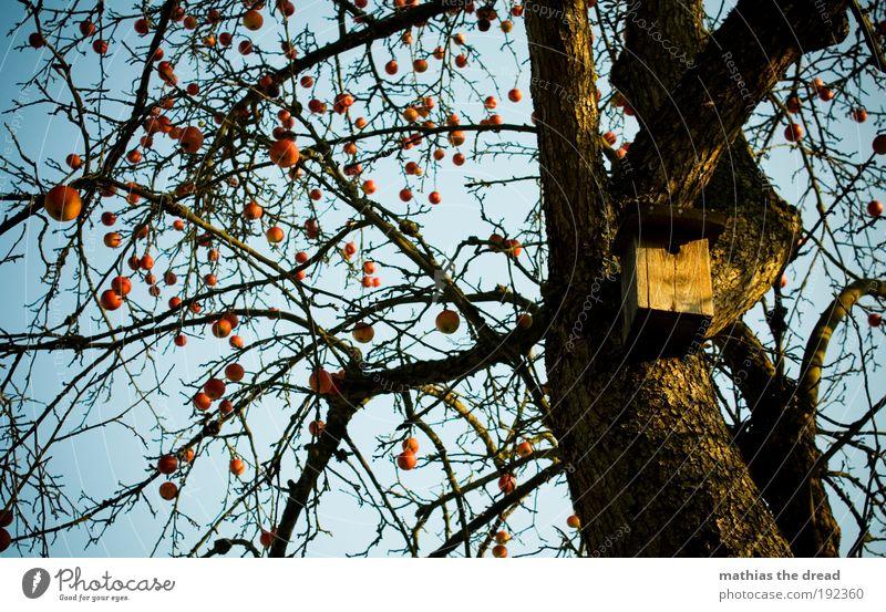 APFELBAUM Natur schön Baum rot Pflanze Winter ruhig Umwelt Schnee Garten Vogel Eis Frucht leer Frost rund