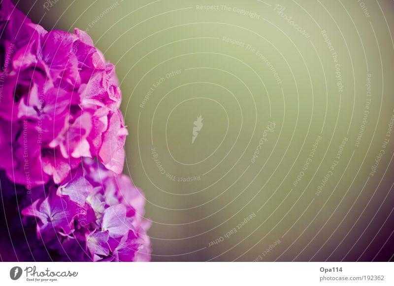 p!nk Natur Blume grün Pflanze Sommer ruhig Erholung Blüte Frühling träumen Park rosa Wachstum violett rein Gelassenheit