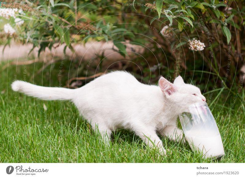 Kleines weißes Kätzchen schön Baby Tier Pelzmantel Haustier Katze klein lustig niedlich schwarz melken jung Katzenbaby heimisch vereinzelt Lebensmittel trinken