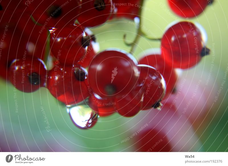 Lecker Natur Pflanze grün Sommer rot schwarz Gesundheit Holz Frucht Wachstum Sträucher Ernährung Wassertropfen genießen süß rund
