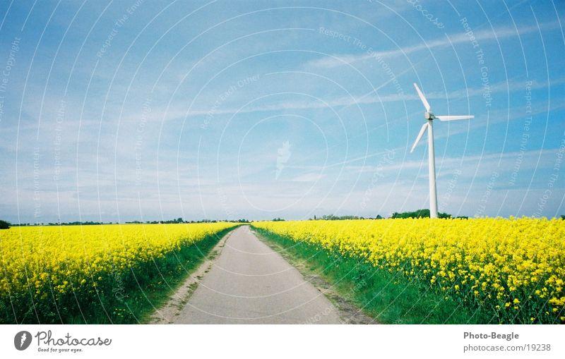 Pusteblume Straße Frühling Wege & Pfade Windkraftanlage Raps Fehmarn Erneuerbare Energie