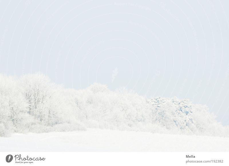 Weiß Umwelt Natur Landschaft Pflanze Himmel Winter Klima Klimawandel Wetter Eis Frost Schnee Baum Wald hell kalt natürlich blau weiß Idylle ruhig Ferne Farbfoto