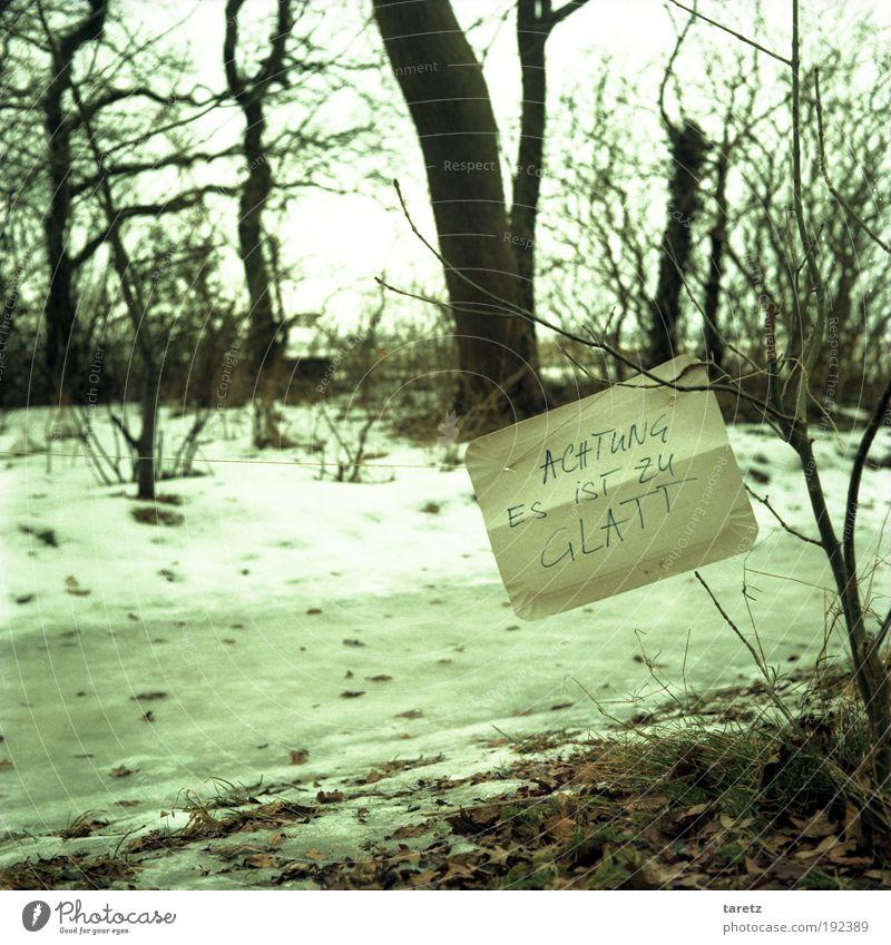 Überzeugend Natur grün Baum Winter Blatt kalt Wege & Pfade grau Küste Eis Wetter Klima Schilder & Markierungen gefährlich Schriftzeichen Frost