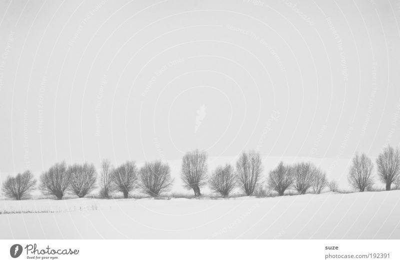 Weidezaun Umwelt Natur Landschaft Urelemente Himmel Wolkenloser Himmel Winter Klima Schnee Baum ästhetisch hell kalt natürlich trist weiß Gefühle Stimmung