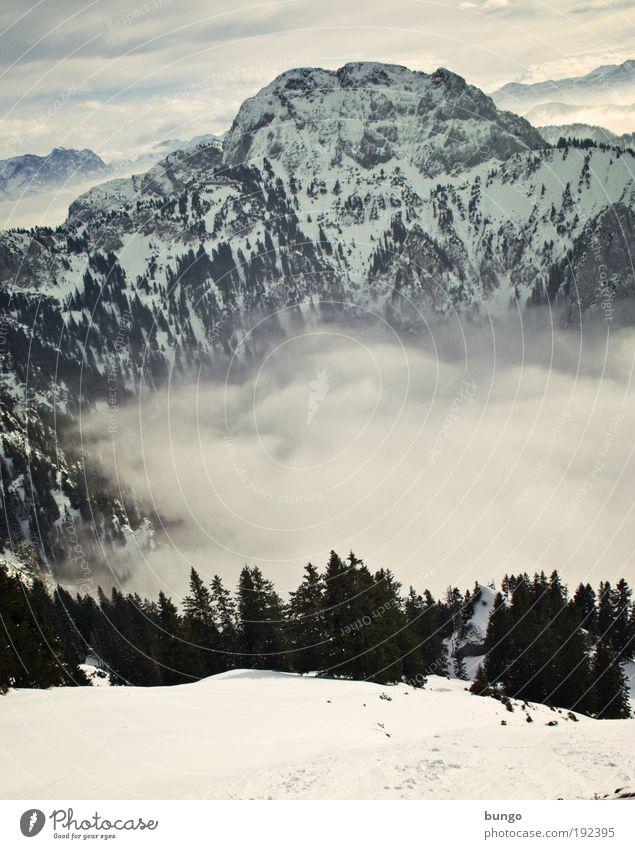 Downhill Ferien & Urlaub & Reisen Winter Schnee wandern Natur Landschaft Himmel Wolken Nebel Baum Felsen Alpen Berge u. Gebirge Gipfel Erholung ästhetisch
