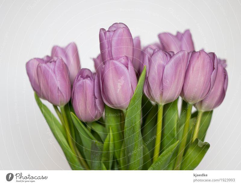 Sonntagsblumen elegant Dekoration & Verzierung Frühling Pflanze Blume Tulpe Blatt Blüte Blumenstrauß Blühend Duft ästhetisch einfach frisch schön natürlich grün