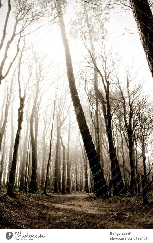 Hänsel und Gretel Himmel Natur Baum Pflanze Einsamkeit Blatt Wolken Erholung Wald Umwelt Regen Erde Angst Nebel Sicherheit Ast