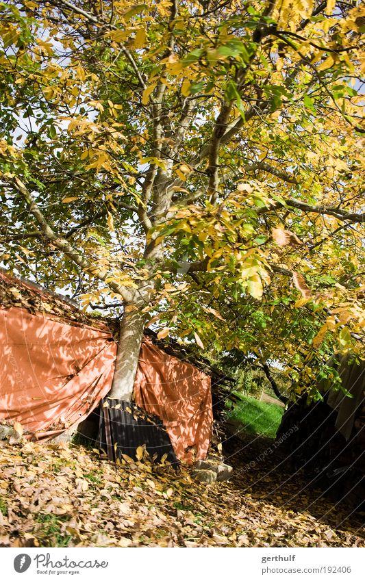 Sonniger Herbst Natur alt Baum Pflanze Blatt Ende Schönes Wetter verblüht
