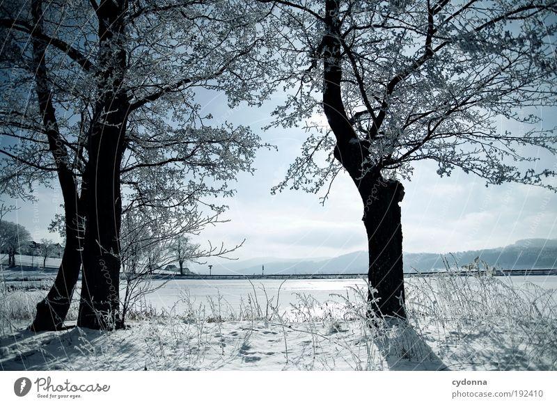 Kälte Natur schön Himmel Baum Winter ruhig Einsamkeit Ferne Leben kalt Schnee Erholung Freiheit träumen Landschaft Eis