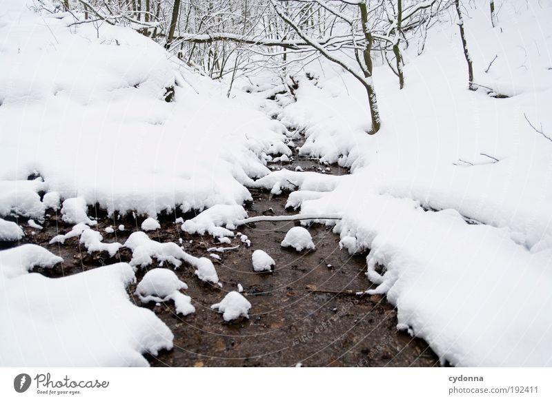 Leises Plätschern im Schnee Natur Wasser schön Baum Winter ruhig Einsamkeit Wald Leben kalt Schnee Erholung träumen Landschaft Eis Umwelt