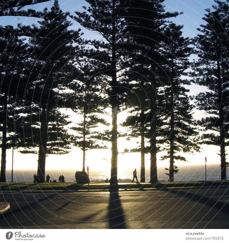 kiefernde schattenstämme Menschengruppe Natur Pflanze Wasser Himmel Horizont Sommer Schönes Wetter Baum Nadelbaum Küste Strand Meer Indischer Ozean Perth