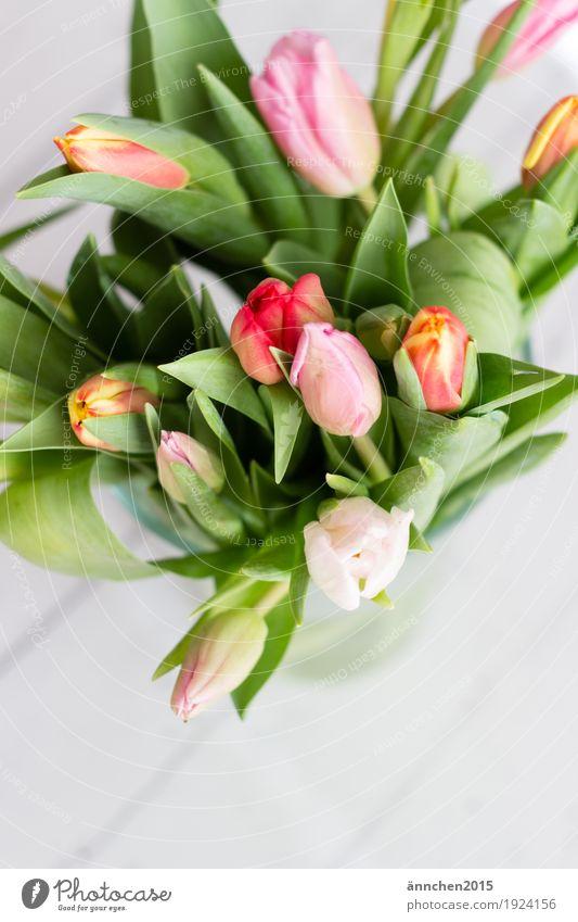 Frühlingserwachen Pflanze grün weiß Blume rot gelb Liebe orange rosa hell Blumenstrauß Tulpe