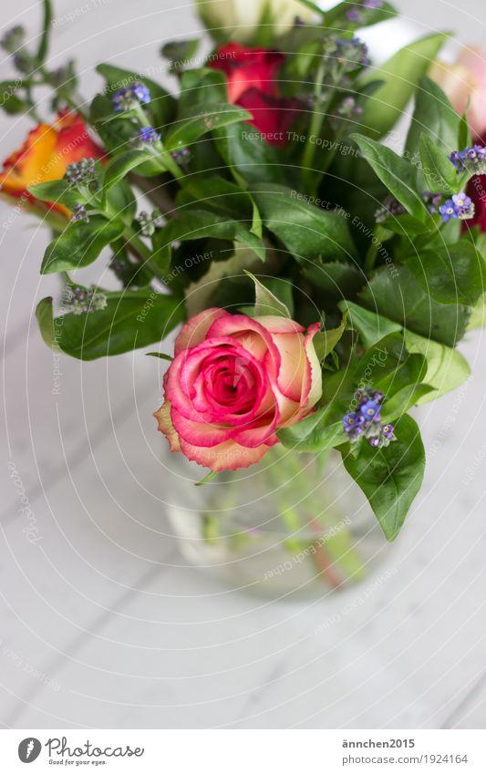 Willkommen Frühling Blumen Pflanzen Liebe Geschenk Freundschaft Vase Rose Rosen Vergißmeinnicht grün rosa blau Holz Holzboden weiß Blumenstrauß Natur