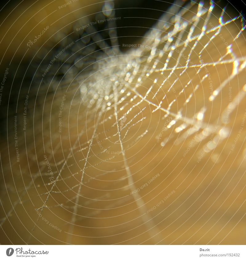 für Diego Umwelt Natur Wassertropfen hängen braun zart Spinnennetz Nahrungssuche glänzend hell leuchten filigran Computernetzwerk Netzsicherheit Netzwerk