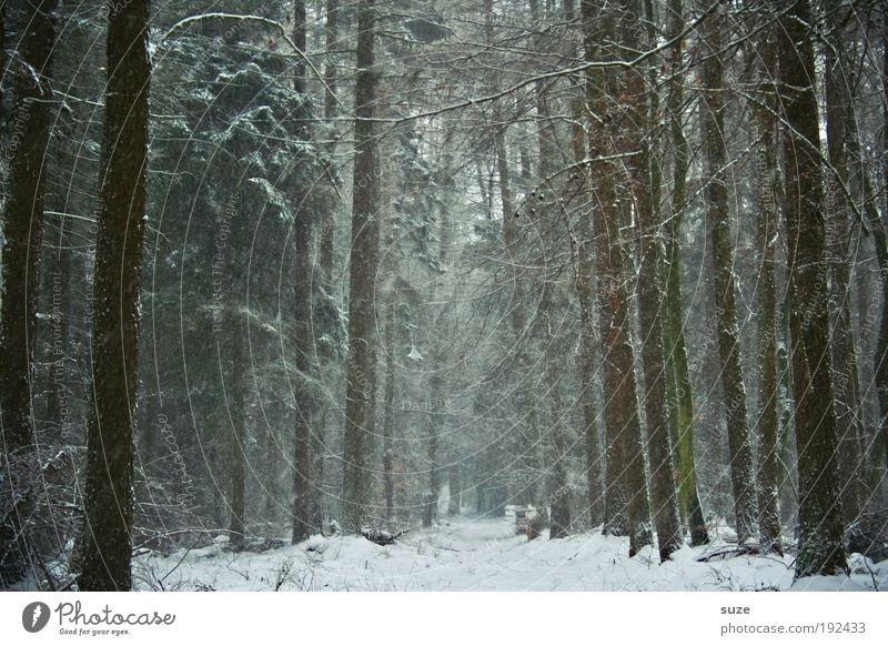 Alt wie ein Baum ... Umwelt Natur Landschaft Winter Klima Wetter Schnee Schneefall Wald Wege & Pfade authentisch dunkel hoch kalt natürlich Einsamkeit