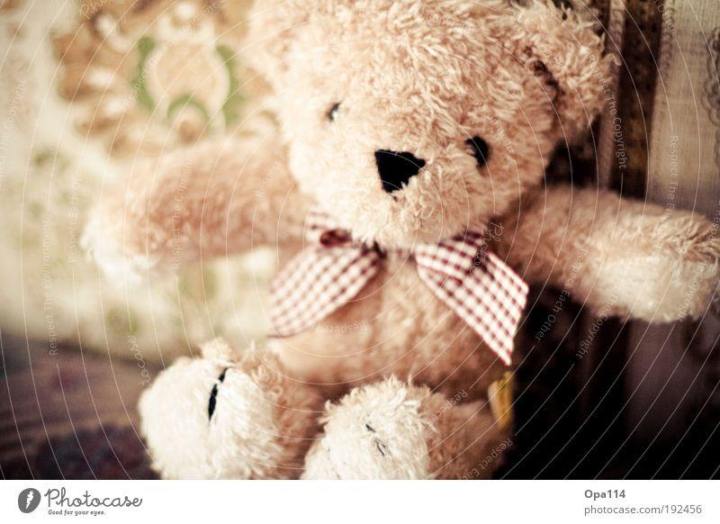 Mr. Teddy Spielen Dekoration & Verzierung Sofa Spielzeug Teddybär Stofftiere sitzen alt Kitsch niedlich braun grün rot schwarz weiß Freude Fröhlichkeit