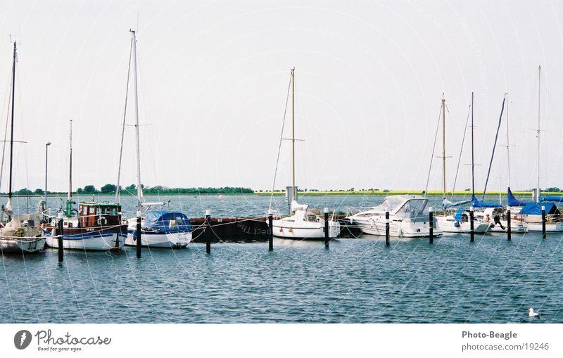 Orth mit Raps Wasser See Wasserfahrzeug Europa Hafen Ostsee Raps Jacht Lachmöwe Sportboot Fehmarn