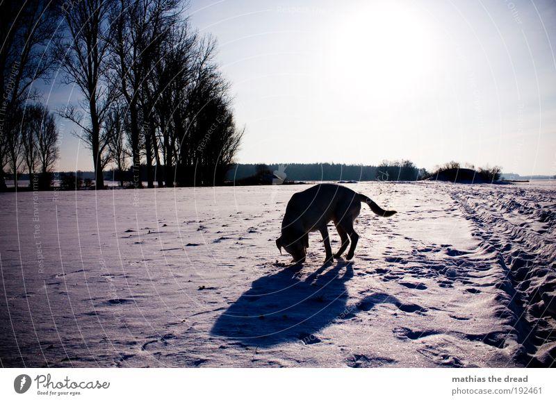 SCHNEEHUND Natur Baum Pflanze Winter Tier Wald kalt Schnee Wiese Spielen Hund Landschaft Eis Feld Umwelt Frost