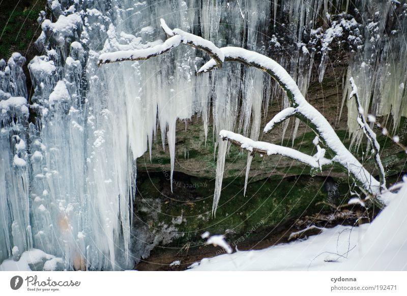 Dezente Winterdeko Natur schön ruhig Leben kalt Schnee träumen Eis Umwelt Wassertropfen groß Zeit Felsen Wachstum Frost