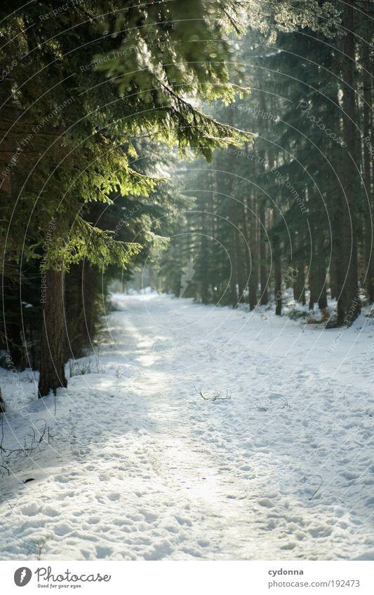 Rutschfest? Natur schön Baum ruhig Winter Einsamkeit Wald Erholung kalt Leben Schnee Landschaft Umwelt Wege & Pfade träumen Eis
