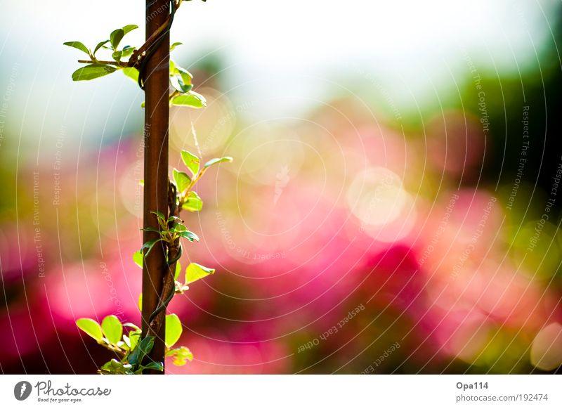 Bokehlicious Natur grün blau Pflanze rot Sommer Blatt Blüte Frühling träumen Park Wärme Luft Zufriedenheit Wetter Umwelt