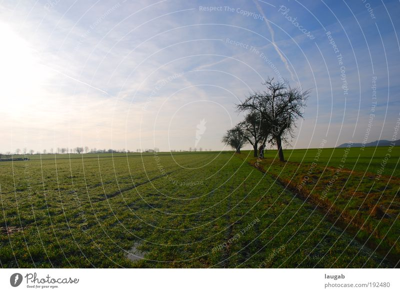 Ein Landstrich Natur Baum grün blau Sommer ruhig Wiese Gefühle träumen Landschaft Stimmung braun Kraft Feld Umwelt Erde