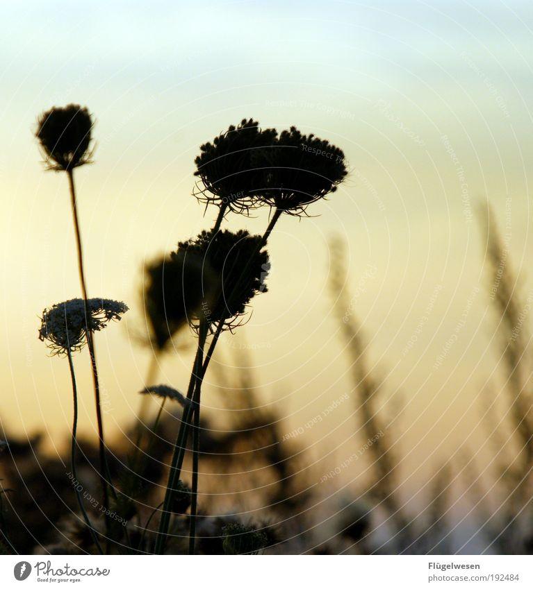 Träumereien Natur Pflanze Sonne Sommer Ferien & Urlaub & Reisen Ferne Tier Wiese Freiheit Landschaft Umwelt Wetter Kunst Feld Freizeit & Hobby Ausflug
