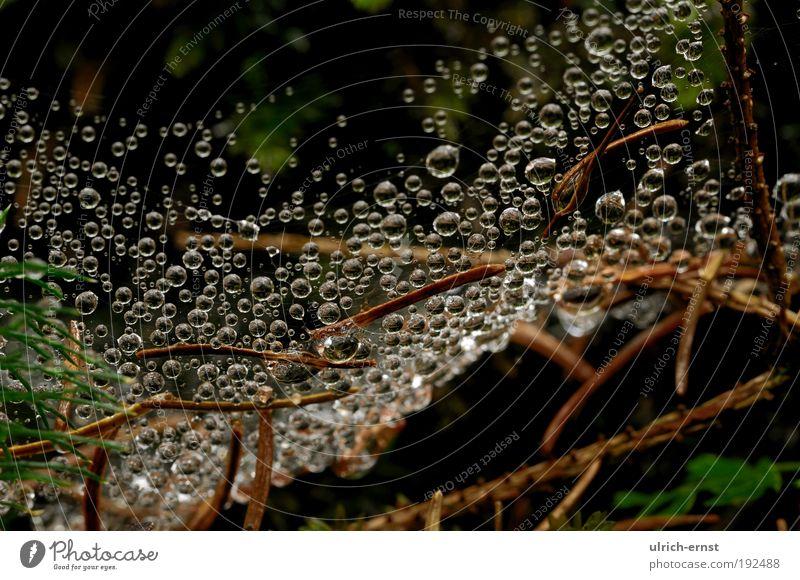 Makrowelt Natur Wassertropfen Wetter Moos Holz Netz Tropfen natürlich Erholung ruhig Waldboden Tannennadel Spinnennetz Farbfoto Gedeckte Farben Außenaufnahme