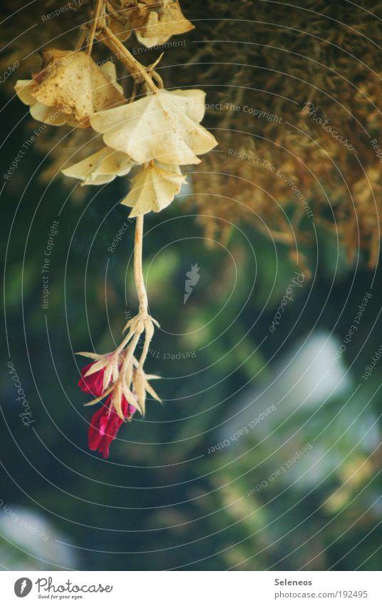 rumhängen Natur alt Blume Pflanze Blatt Herbst Blüte Gras Park Umwelt Wachstum Sträucher Wandel & Veränderung Klima Vergänglichkeit