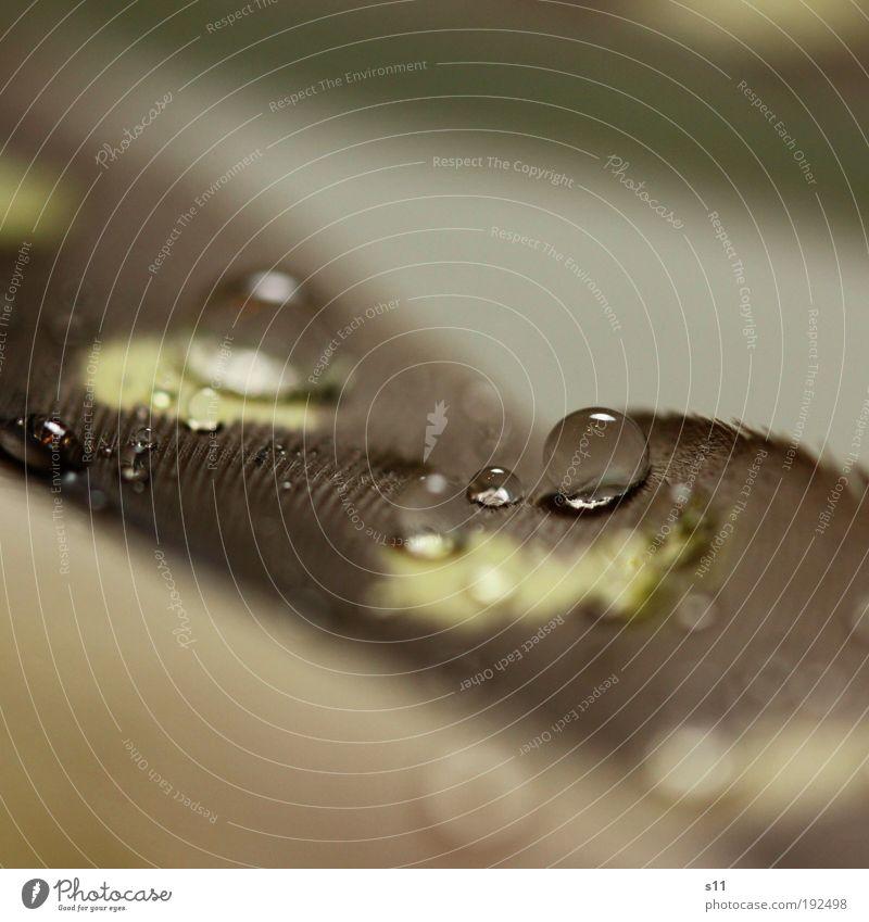 FederPerle schön Wasser gelb klein grau glänzend frisch elegant Kraft trist ästhetisch Feder Wassertropfen nass weich rund