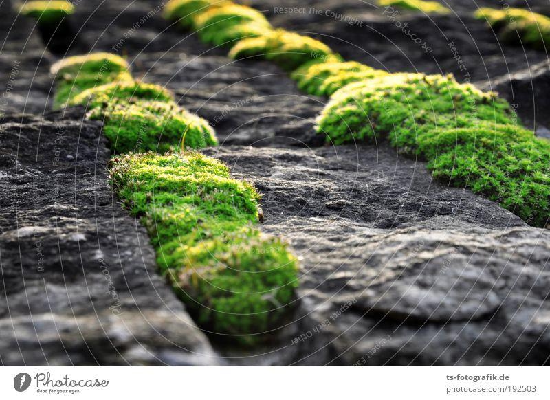Moos hamma Umwelt Natur Pflanze Urelemente Erde Klima Gras Wachstum Evolution Quelle Feld Granit Stein Beton Zeichen Blühend schleimig grau grün schwarz Erfolg