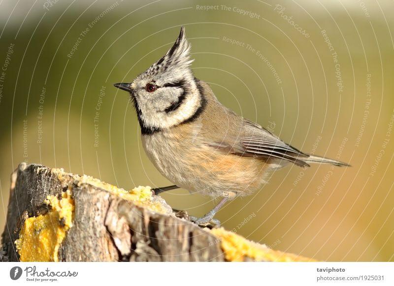 Schöner Gartenvogel am Zufuhr schön Winter Umwelt Natur Tier Wald Vogel beobachten sitzen klein natürlich niedlich wild braun grün schwarz verziert Titte