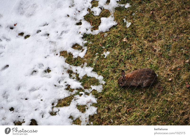 Adios Schnee und Eis! Natur grün Pflanze Winter Tier kalt Wiese Frühling Wetter Klima Frost Wildtier Ohr Fell