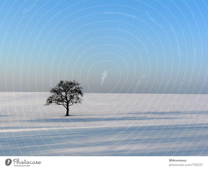 einsamer Baum Natur blau weiß Ferien & Urlaub & Reisen Pflanze Winter Einsamkeit Ferne Landschaft kalt Schnee Feld Klima Schönes Wetter Fernweh