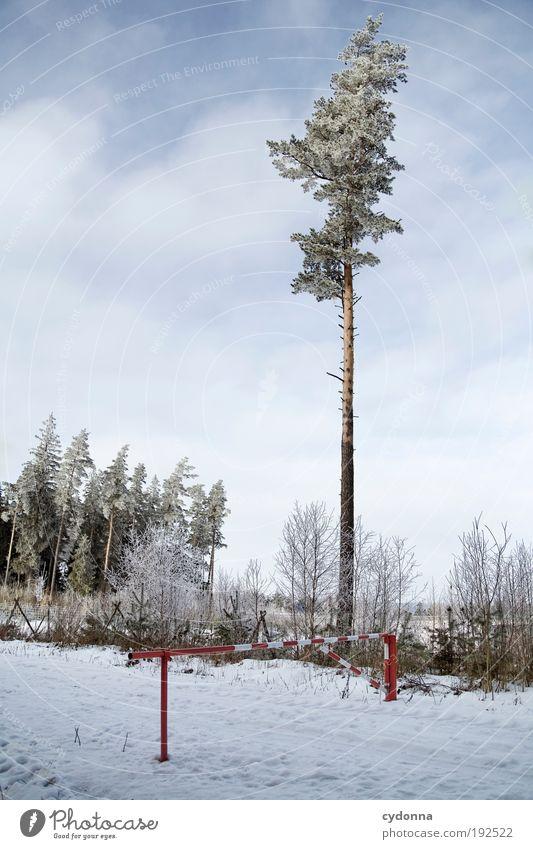 Kyrill hat meine Freunde getötet Natur Baum Winter ruhig Einsamkeit Wald Leben Schnee Freiheit träumen Wege & Pfade Landschaft Eis wandern Umwelt Zeit