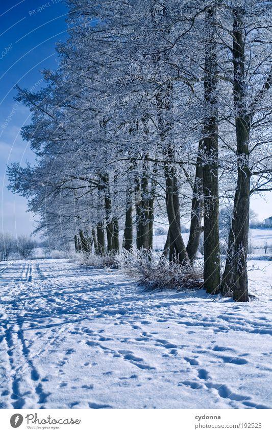 Winterspaziergang Natur schön Baum Winter ruhig Einsamkeit Ferne Leben kalt Schnee Freiheit träumen Wege & Pfade Landschaft Luft Eis