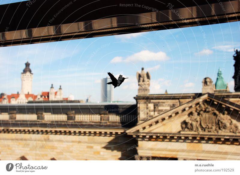 fensterplatz leipzig Kunst Leipzig Deutschland Sachsen Europa Hochhaus Gebäude Turm Rathaus Mauer Wand Fassade Dach Vogel 1 Tier Fenstervogel modern