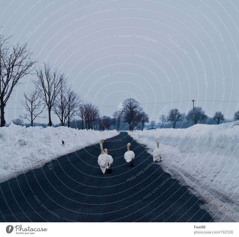 Futtersuche Natur Baum Winter Freude Tier Straße Leben Schnee Umwelt Landschaft Luft Eis Feld Kraft Wind Insel