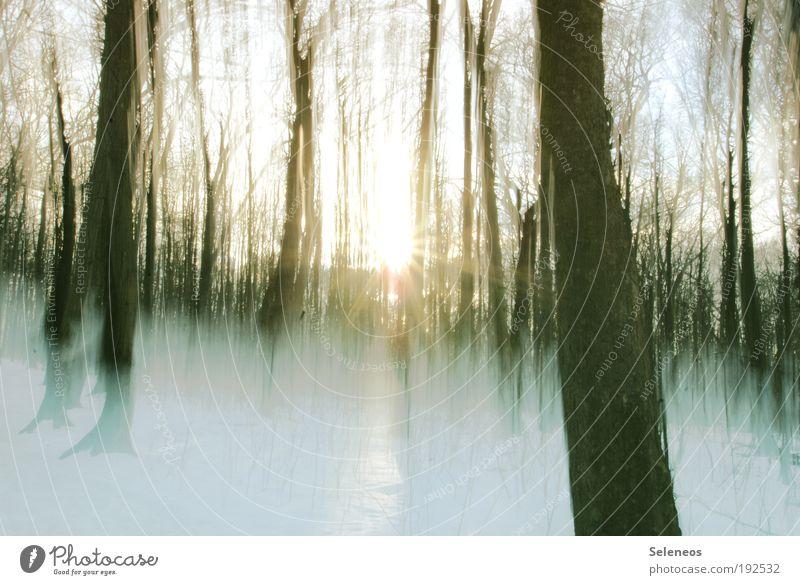 Schneereste Umwelt Natur Landschaft Himmel Sonne Sonnenaufgang Sonnenuntergang Sonnenlicht Winter Klima Wetter Eis Frost Pflanze Baum kalt Bewegung Einsamkeit