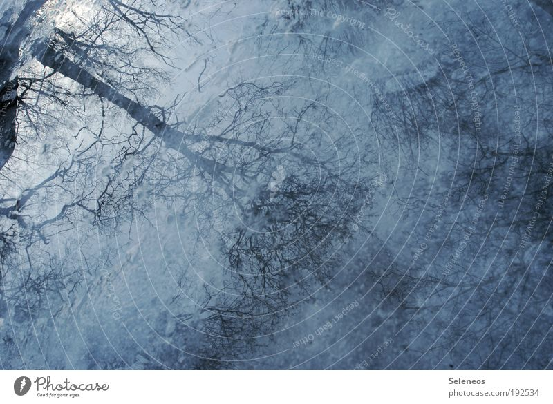Spiegelreflex Natur Wasser Himmel Baum blau Pflanze Wald dunkel kalt Gras Regen Landschaft Stimmung Wetter Umwelt
