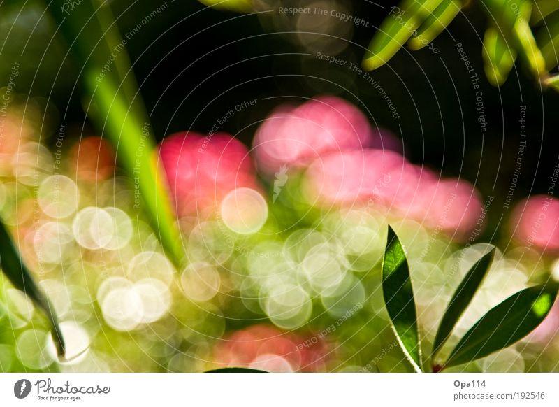 Bokehlicious II Natur schön weiß Sonne Blume grün Pflanze Sommer Freude schwarz Blüte Frühling Glück träumen Park Zufriedenheit