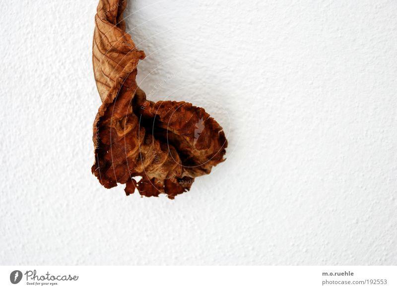 scheide alt Pflanze Blatt Tod Stimmung elegant natürlich ästhetisch trist einzigartig Vergänglichkeit einfach Vergangenheit Verfall trashig Zerstörung
