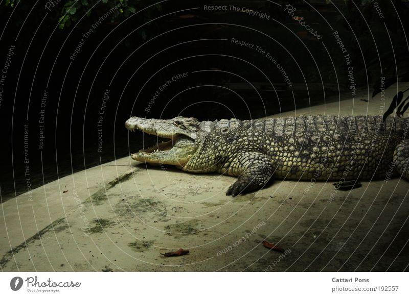 abwarten.... Tier grau Zoo Wildtier