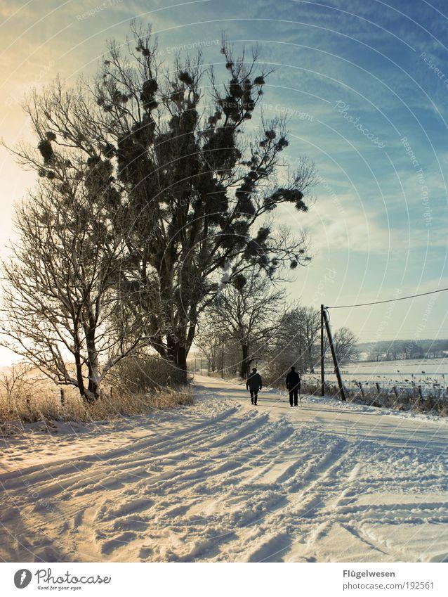 Wintertime schön Himmel Sonne Ferien & Urlaub & Reisen kalt Schnee Paar Park Eis Zufriedenheit Zusammensein wandern Wetter Ausflug Lifestyle