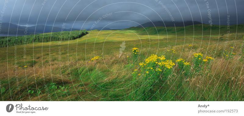 Welcome to the Highlands Himmel Natur Ferien & Urlaub & Reisen grün Pflanze Sommer Blume Wolken Ferne Landschaft gelb Wiese Berge u. Gebirge Gras grau Horizont