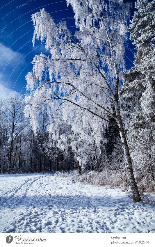 Das letzte Winterfoto Wohlgefühl Erholung ruhig Ausflug Ferne Freiheit Winterurlaub wandern Umwelt Natur Landschaft Himmel Klima Schönes Wetter Eis Frost Schnee