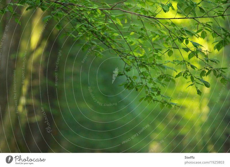 sonniges Grün mit Lichtreflexen im Frühlingswald Baum Baumstamm Laubbaum Maiwald Frühlingserwachen Waldbaden Licht im Wald Licht durch Blätter Lichtschein