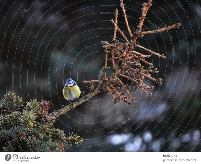 Frühling, Frühling, wird es nun bald! Umwelt Natur Pflanze Tier Sommer Herbst Winter Klima Wetter Schönes Wetter Baum Wildpflanze Wald Wildtier Vogel Flügel 1